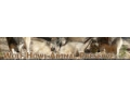 Wolf Howl Animal Preserve Coupon Codes